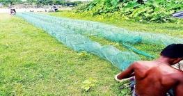 রাজবাড়ীর পদ্মায় চায়না জাল দিয়ে মাছ শিকার