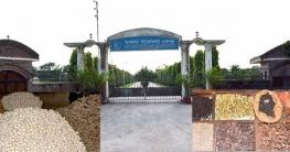 মাগুরায় মসলা জাতীয় ফসলের প্রযুক্তি হস্তান্তর বিষয়ে কর্মশালা