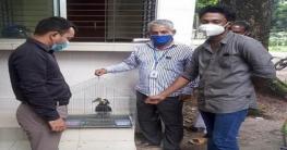 বোয়ালমারীতে বিরল প্রজাতির ধনেশের বাচ্চা উদ্ধার