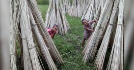 পাটকাঠির ভালো দাম পেয়ে বেজায় খুশি কালুখালীর কৃষকরা