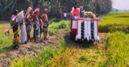 বোয়ালমারীতে কৃষকের ধান কেটে দিল শেখ রাসেল শিশু পরিষদ